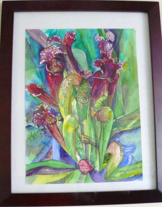 Framed Sarracenia Artwork (kulamauiman )-26446_1428448433938_2492311_n-jpg