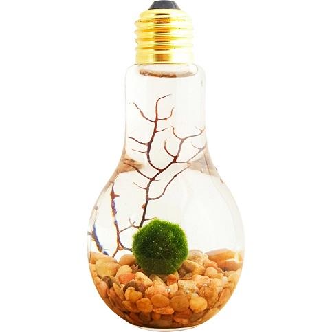 PAID (Est ) Marimo Moss Ball - Light Bulb-marimo2-jpg