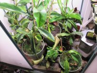 new greenhouse pics 001.JPG