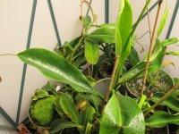 new greenhouse pics 003.JPG