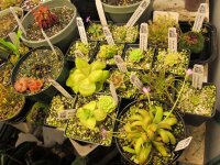 new greenhouse pics 006.JPG