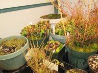 new greenhouse pics 007.JPG