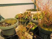 new greenhouse pics 008.JPG