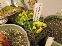new greenhouse pics 012.JPG