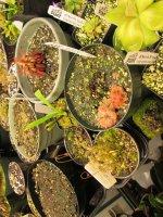 new greenhouse pics 013.JPG
