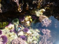 anemone 9.18.21.JPG