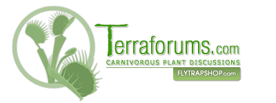 TerraForums Venus Flytrap, Nepenthes, Drosera and more talk